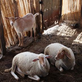 La festa dell'Eid al Kabir in Marocco